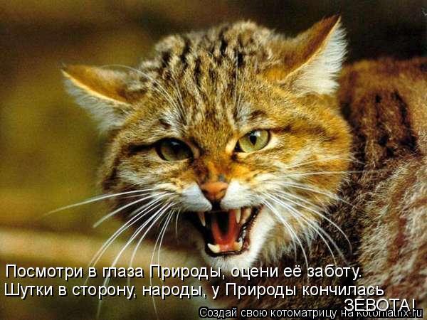 Котоматрица: Посмотри в глаза Природы, оцени её заботу. Шутки в сторону, народы, у Природы кончилась ЗЕВОТА!