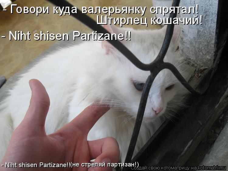 Котоматрица: - Говори куда валерьянку спрятал! Штирлец кошачий! - Niht shisen Partizane!! - Niht shisen Partizane!! (не стреляй партизан!)