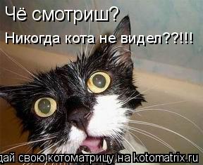 Котоматрица: Чё смотриш?  Никогда кота не видел??!!!
