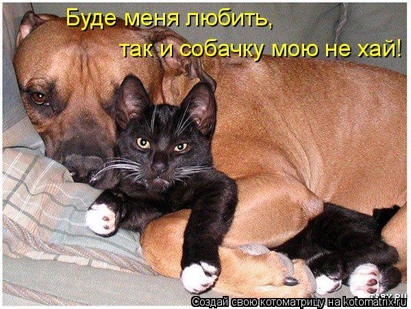 Котоматрица: Буде меня любить,  так и собачку мою не хай!