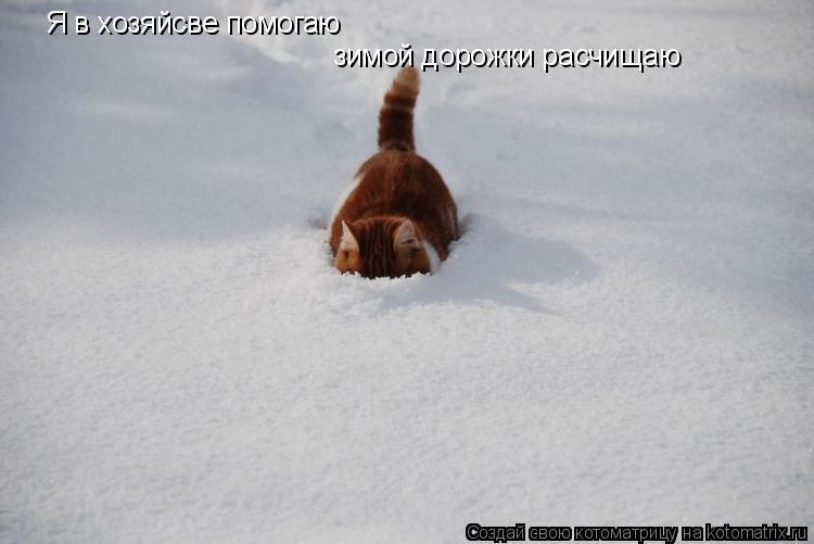 Котоматрица: Я в хозяйсве помогаю зимой дорожки расчищаю