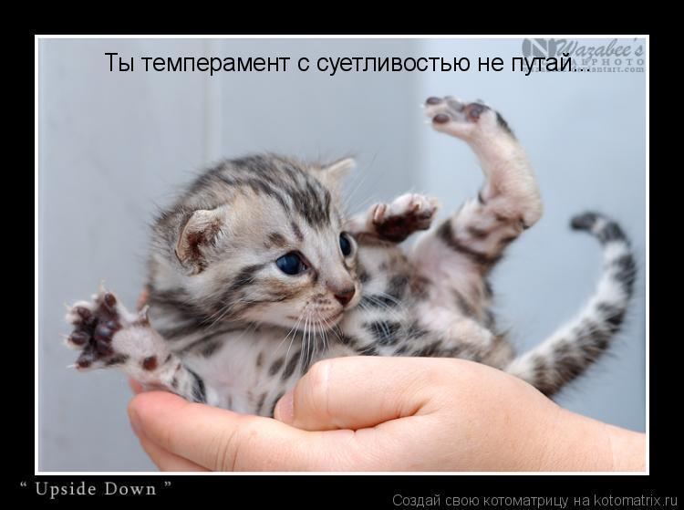Котоматрица: Ты темперамент с суетливостью не путай...