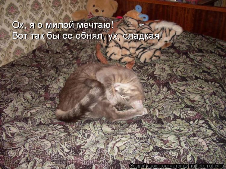 Котоматрица: Ох, я о милой мечтаю!  Вот так бы ее обнял, ух, сладкая!