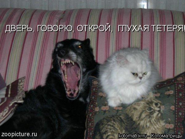 Котоматрица: ДВЕРЬ, ГОВОРЮ, ОТКРОЙ,  ГЛУХАЯ ТЕТЕРЯ!!!