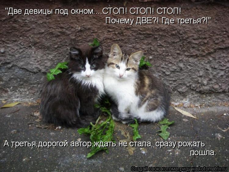 """Котоматрица: """"Две девицы под окном....СТОП! СТОП! СТОП! Почему ДВЕ?! Где третья?!"""" А третья,дорогой автор,ждать не стала, сразу рожать пошла."""