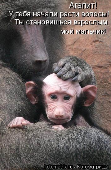 Котоматрица: Агапит!   У тебя начали расти волосы! Ты становишься взрослым  мой мальчик!