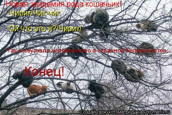 Котоматрица: -Новая эпидемия рода кошачьих! -Чирик!Чик-чик Ой что это я?!Чирик! Так и неузнало человечество о странной болезни котов... Конец!