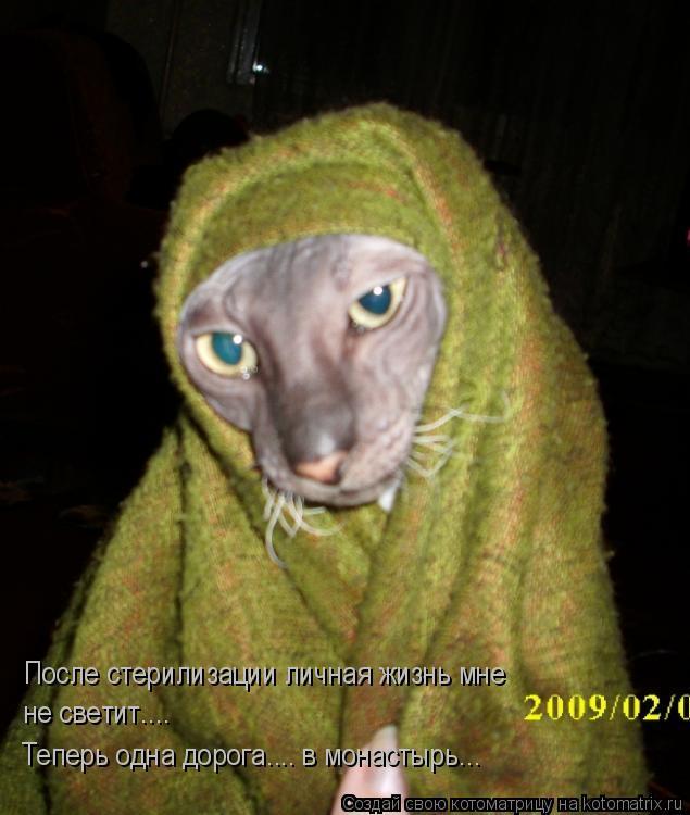 Котоматрица: После стерилизации личная жизнь мне  не светит.... Теперь одна дорога.... в монастырь...