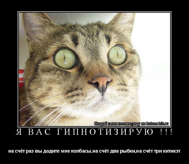 Котоматрица: я вас гипнотизирую !!! на счёт раз вы додите мне колбасы,на счёт два рыбки,на счёт три китикэт