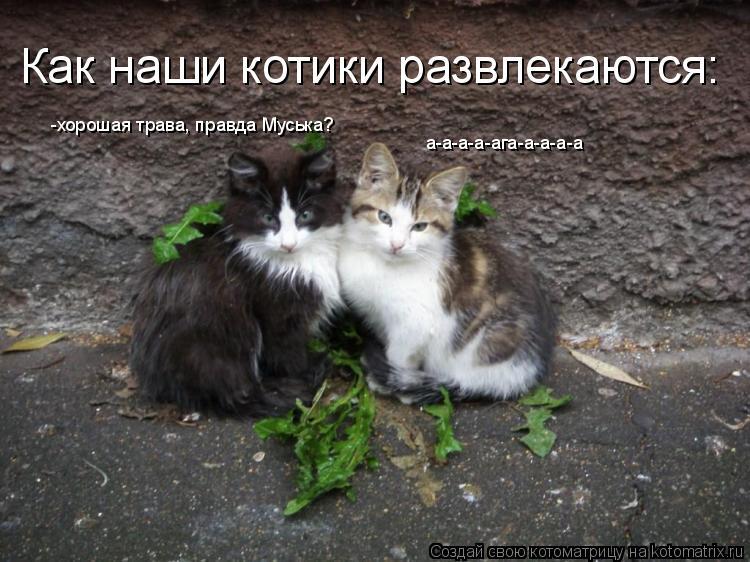 Котоматрица: -хорошая трава, правда Муська? а-а-а-а-ага-а-а-а-а Как наши котики развлекаются: