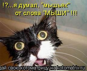"""Котоматрица: !?...я думал, """"мышьяк""""  от слова """"МЫШИ"""" !!!"""