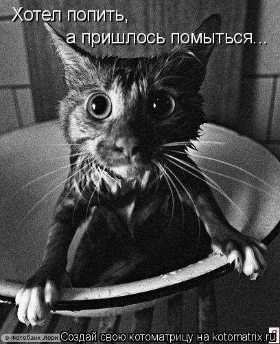 Котоматрица: Хотел попить,  а пришлось помыться...