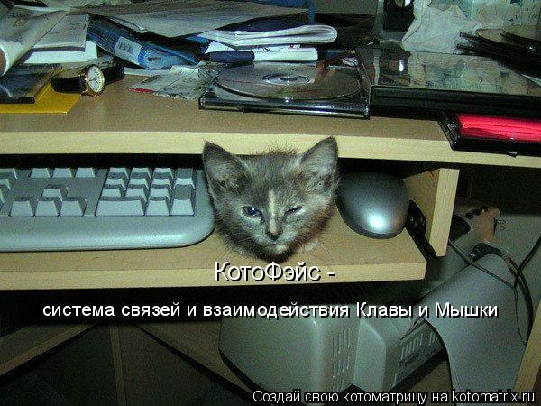 Котоматрица: КотоФэйс -  система связей и взаимодействия Клавы и Мышки