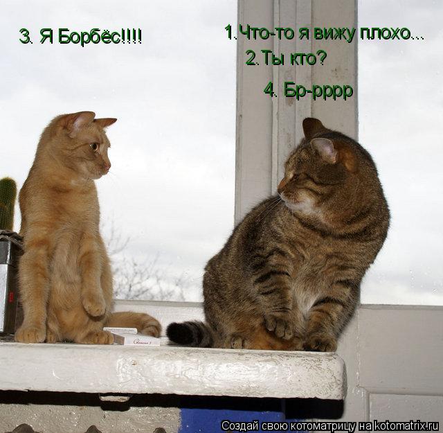 Котоматрица: 1.Что-то я вижу плохо... 2.Ты кто? 3. Я Борбёс!!!! 4. Бр-рррр