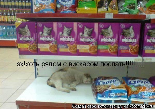 Котоматрица: эх!хоть рядом с вискасом поспать!!!!!!!!!