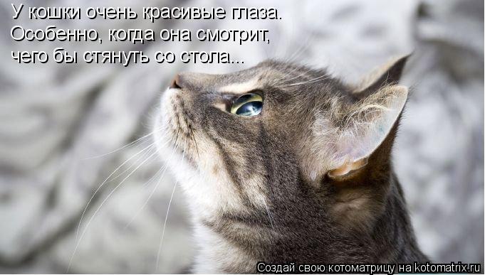 Котоматрица: У кошки очень красивые глаза. Особенно, когда она смотрит, чего бы стянуть со стола...