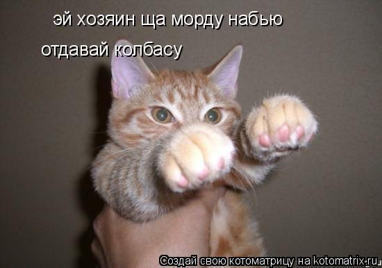 Котоматрица: эй хозяин ща морду набью  отдавай колбасу