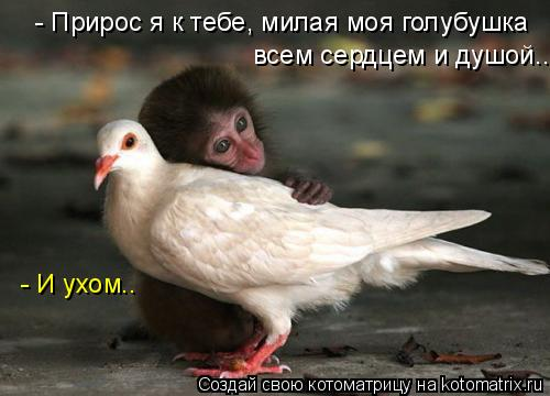 Котоматрица: всем сердцем и душой... - Прирос я к тебе, милая моя голубушка - И ухом..