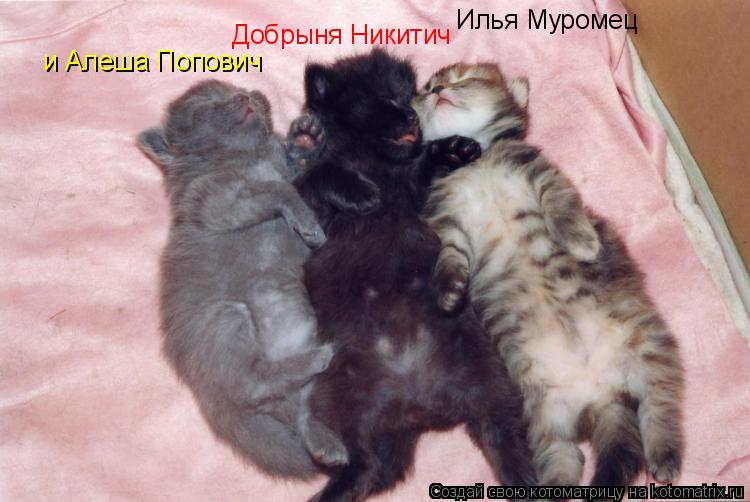 Котоматрица: Илья Муромец Добрыня Никитич и Алеша Попович