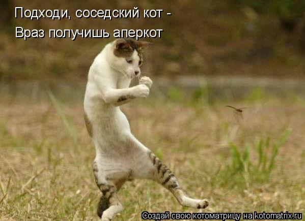 Котоматрица: Подходи, соседский кот - Враз получишь аперкот