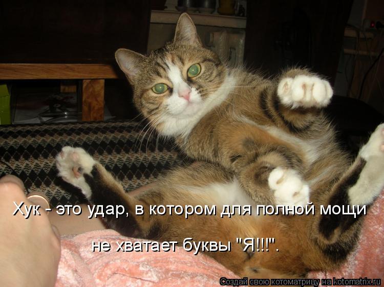 """Котоматрица: Хук - это удар, в котором для полной мощи  не хватает буквы """"Я!!!""""."""