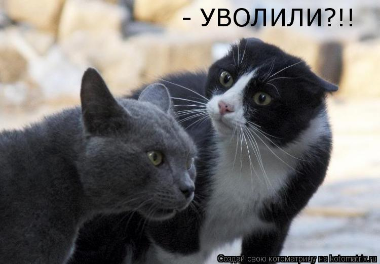 Котоматрица: - УВОЛИЛИ?!!