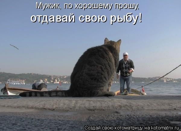 Котоматрица: Мужик, по хорошему прошу, отдавай свою рыбу!