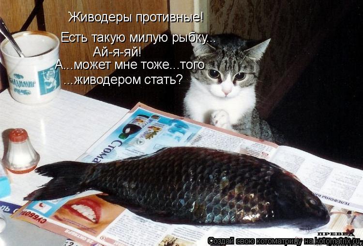Котоматрица: Живодеры противные! Есть такую милую рыбку... Ай-я-яй! А...может мне тоже...того ...живодером стать?