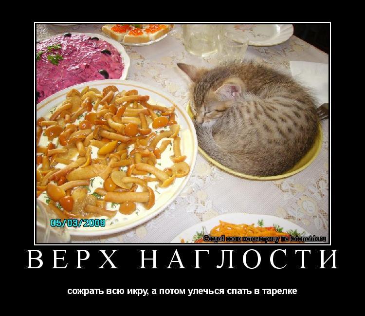 Котоматрица: ВЕРХ НАГЛОСТИ сожрать всю икру, а потом улечься спать в тарелке