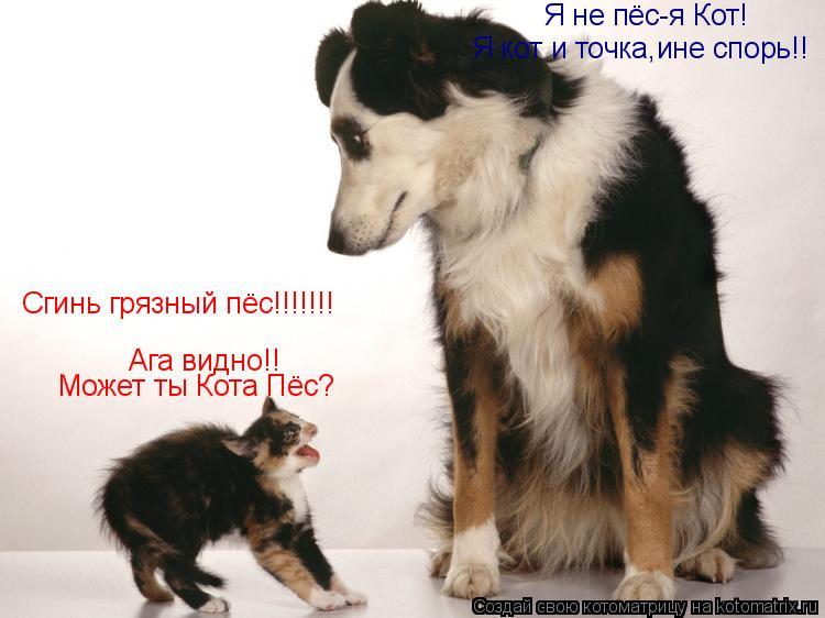 Котоматрица: Сгинь грязный пёс!!!!!!! Ага видно!! Может ты Кота Пёс? Я не пёс-я Кот! Я кот и точка,ине спорь!!