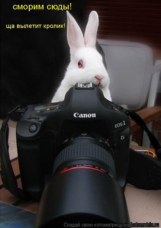 Котоматрица: сморим сюды! ща вылетит кролик!