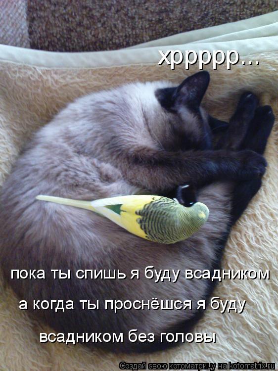 Котоматрица: хррррр... пока ты спишь я буду всадником а когда ты проснёшся я буду всадником без головы