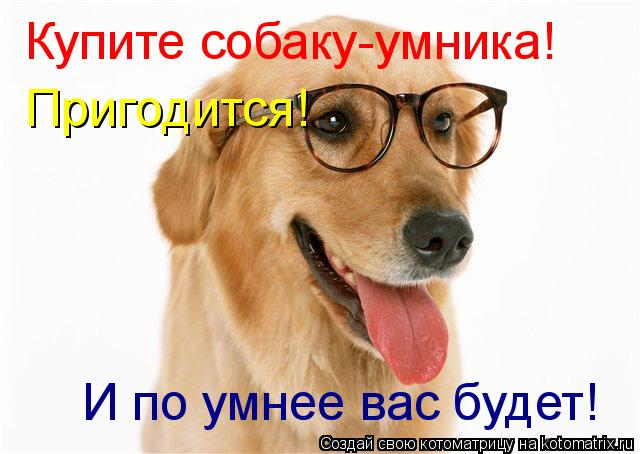 Котоматрица: Купите собаку-умника! Пригодится! И по умнее вас будет!