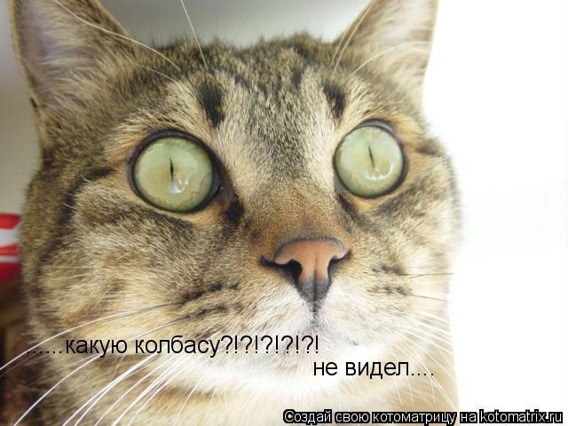 Котоматрица: ......какую колбасу?!?!?!?!?! не видел....