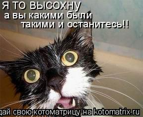 Котоматрица: я то высохну а вы какими были такими и останитесь!!