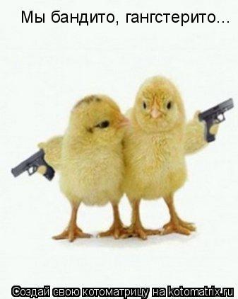 Котоматрица: Мы бандито, гангстерито...