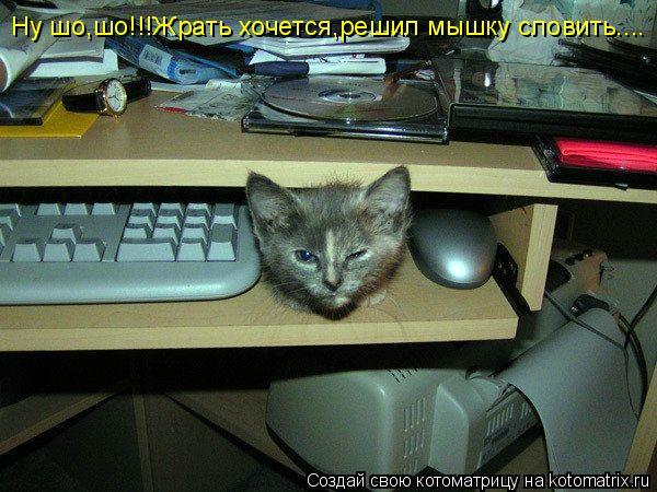 Котоматрица: Ну шо,шо!!!Жрать хочется,решил мышку словить....