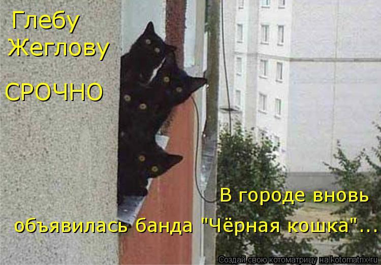 """Котоматрица: Глебу Жеглову СРОЧНО В городе вновь объявилась банда """"Чёрная кошка""""..."""