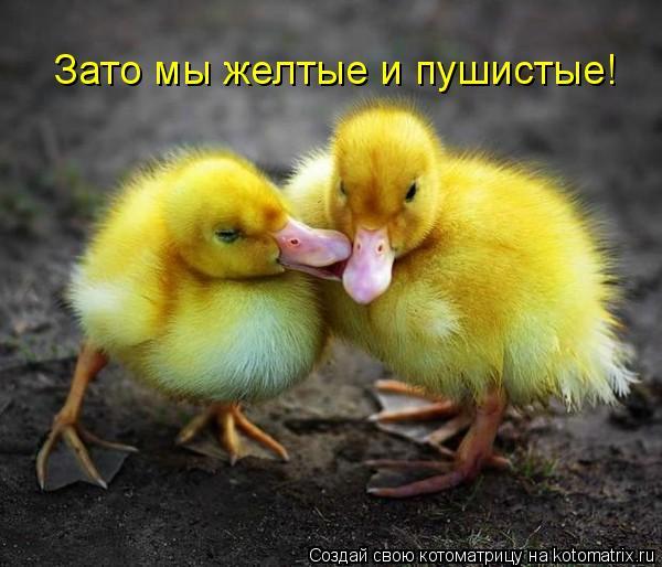Котоматрица: Зато мы желтые и пушистые!