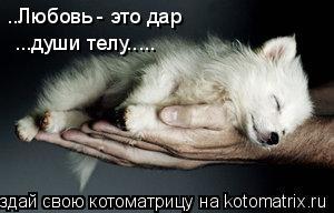 Котоматрица: ..Любовь - это дар ...души телу.....