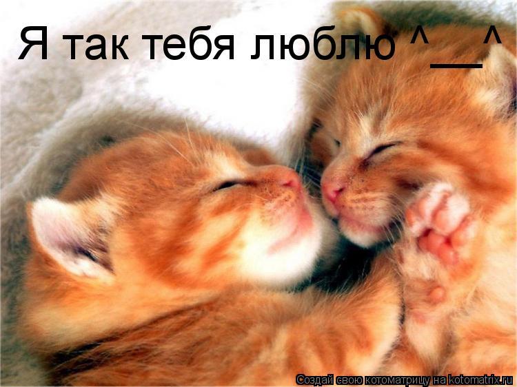 Котоматрица: Я так тебя люблю ^__^