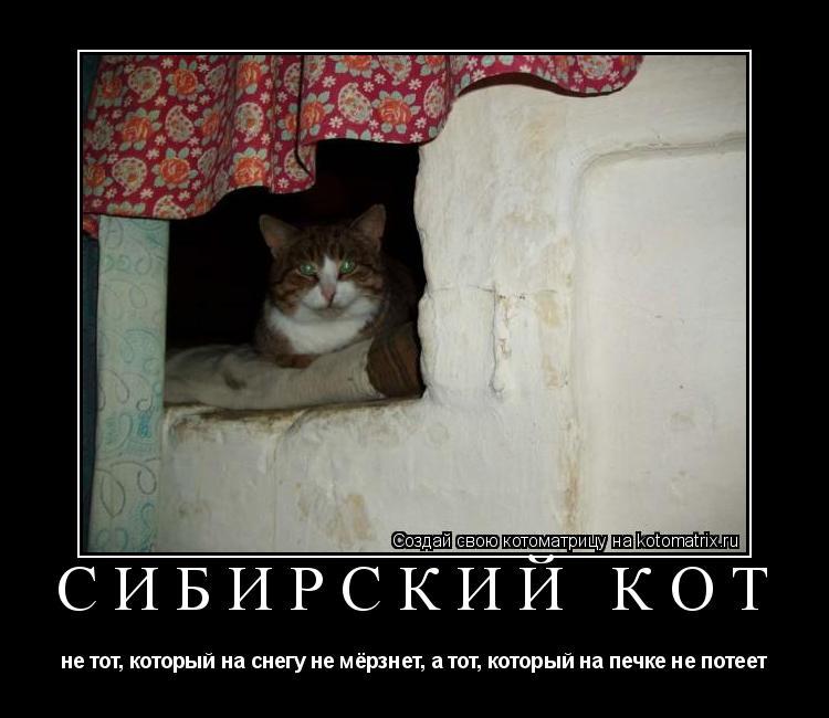 Котоматрица: СИБИРСКИЙ КОТ не тот, который на снегу не мёрзнет, а тот, который на печке не потеет