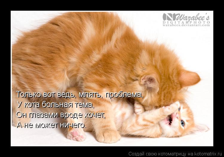 Котоматрица: Только вот ведь, млять, проблема, У кота больная тема, Он глазами вроде хочет, А не может ничего.