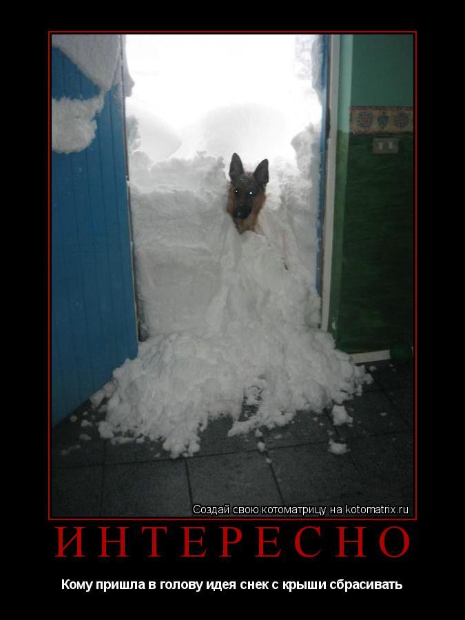 Котоматрица: Интересно Кому пришла в голову идея снек с крыши сбрасивать