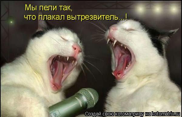Котоматрица: Мы пели так, что плакал вытрезвитель...!
