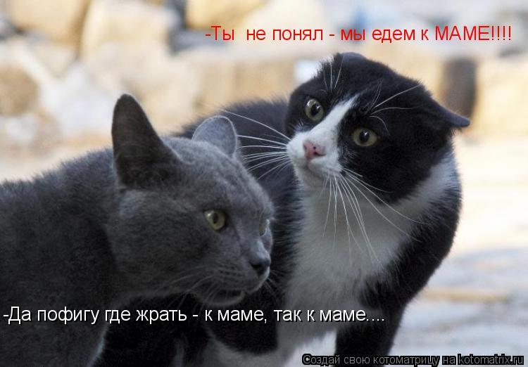 Котоматрица: -Ты  не понял - мы едем к МАМЕ!!!! -Да пофигу где жрать - к маме, так к маме....