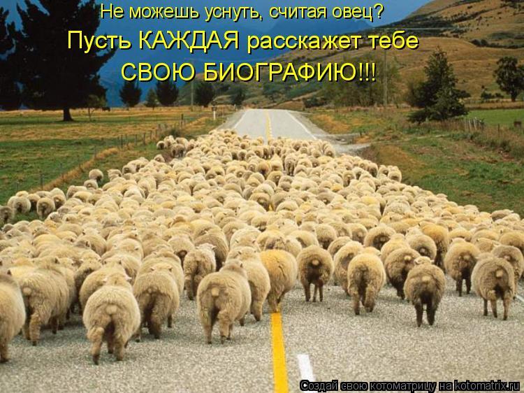 Котоматрица: Не можешь уснуть, считая овец? Пусть КАЖДАЯ расскажет тебе  СВОЮ БИОГРАФИЮ!!!