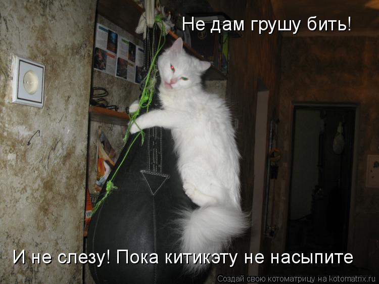Котоматрица: Не дам грушу бить! И не слезу! Пока китикэту не насыпите