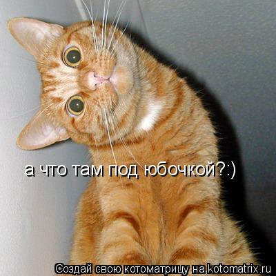 Котоматрица: а что там под юбочкой?:)