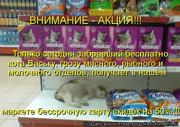 Котоматрица: ВНИМАНИЕ - АКЦИЯ!!! Только сегодня забравший бесплатно  кота Ваську, грозу мясного, рыбного и маркете бессрочную карту скидок на 50%!!!! молочно